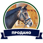 Конный магазин Хвост и Грива Товары для конного спорта и верховой езды Кудинова Елена Максимовна